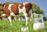 سرانه مصرف شیر در کشور ٣ لیوان در هفته